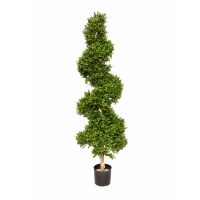 Boxwood spiral plant, int./ext. 72 feet, 2 year warranty