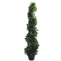 Ficus spiral int./ext. 4 feet, 2 years warranty