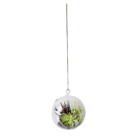 Suspension plantes grasses variées 6 x 7''
