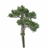Tige de bonsaï en cèdre 15''