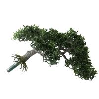 Tige de bonsaï tea leaf 15''