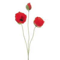 Red Poppies, 20''