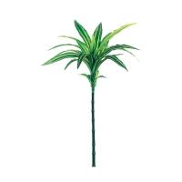 Tige de dracaena vert et blanc 24''