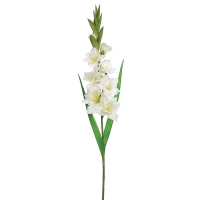 White Gladiolus Spray, 36.6''