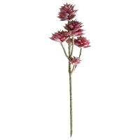 Tige de petites plantes succulentes bourgognes 13''