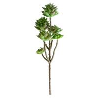 Tige de petites plantes succulentes vertes 13''