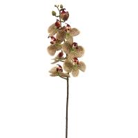 Tige d'orchidées phalaenopsis bourgognes et vertes, 29''