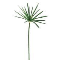 Tige papyrus vert 42''