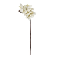 Tige de phalaenopsis crème 28''