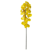 Yellow phalaenopsis spray 44,5''