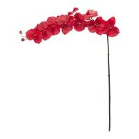 Tige de phalaenopsis rouge géante 45''