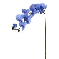 Tige de phaleanopsis bleu 38''