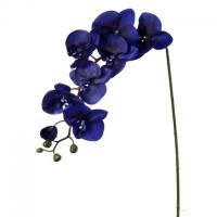38'' Indigo phaleanopsis stem