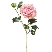 Pivoine rose, 31''