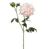 Pivoine rose pâle, 31''