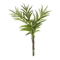 Tige de plante grasse, 11''