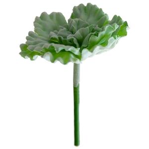 Laitue succulente 9''
