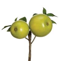 Tige de pommes vertes 8''