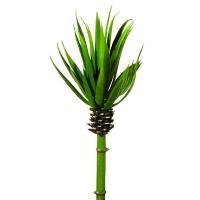 Tige de succulente verte 10''