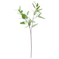 Tige d'eucalyptus 31''