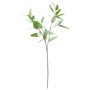 Eucalyptus Stem, 31''