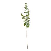 Tige d'eucalyptus 34''
