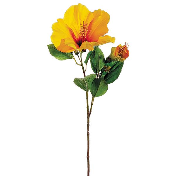 tige d 39 hibiscus jaune 26 39 39 d cors v ronneau. Black Bedroom Furniture Sets. Home Design Ideas