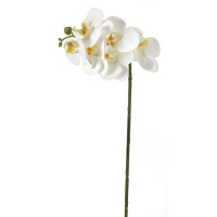 White greenhouse phaleanopsis spray 23''