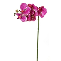 Purple greenhouse phaleanopsis spray 23''