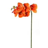 Orange greenhouse phaleanopsis spray 23''