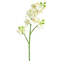 Tige d'orchidée blanc 21''