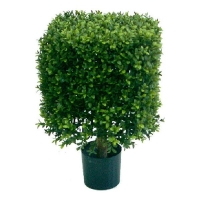 Square Boxwood topiary, int./ext. 1.5 feet ,2 years warranty