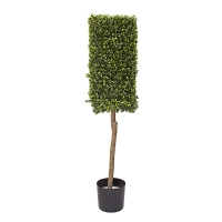 Rectangular boxwood topiary 4 feet int.ext., 2 years warrant