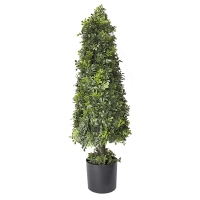 37'' English boxwood cone int./ext.