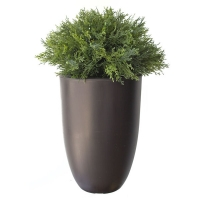 Cypress topiary int./ext. 2 feet, 2 years warranty