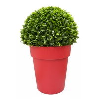 Topiaire de ficus en pot rond rouge, int./ext.