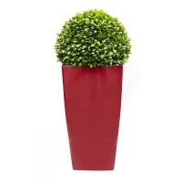 Topiaire de jade en pot rectangle rouge, int./ext.