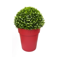 Topiaire de jade en pot rond rouge, int./ext.