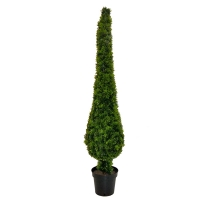 Podocarpus topiary in pot, int./ext. 5 feet, 2 years warrant