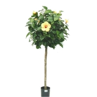 Artificial tree, 5' chinese hibiscus with yellow flowers
