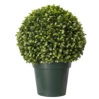 Topiaire de ficus jade en pot 29''