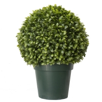Jade ficus ball topiairy 2.5 feet