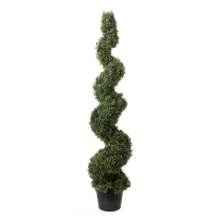 Topiaire spirale en boxwood 5'