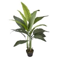 51'' Outdoor traveller palm