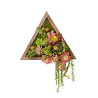 Triangular Arrangement of Succulents