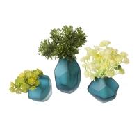 Trilogie de plantes grasses