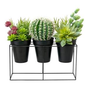 Cactus et plantes grasses en pots