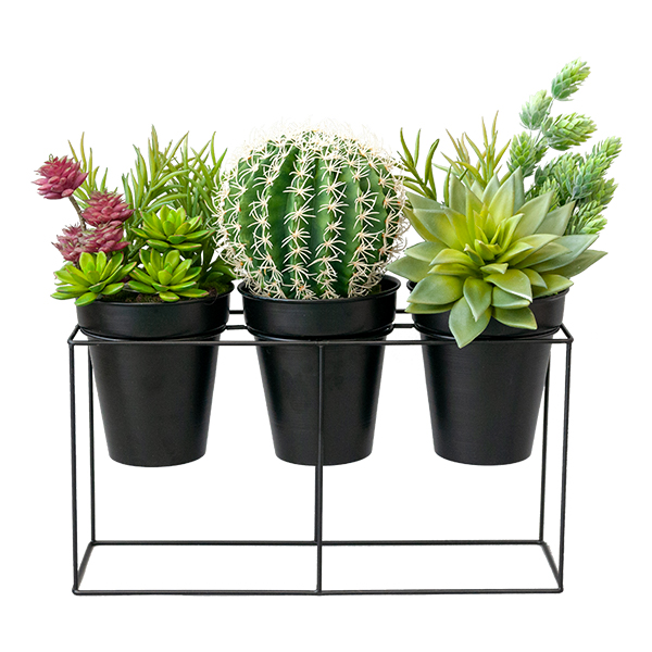 cactus et plantes grasses en pots d cors v ronneau. Black Bedroom Furniture Sets. Home Design Ideas