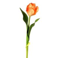 17'' Orange tropical tulip
