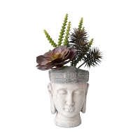 Pot bouddha, plantes grasses